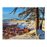 Árboles de pino de la nieve del invierno del barra tarjeta postal