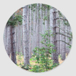 Árboles de pino de Michigan Etiquetas Redondas