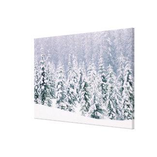 Árboles de pino nevados impresión en lienzo estirada