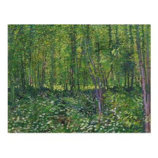 Árboles de Van Gogh y postal de la maleza