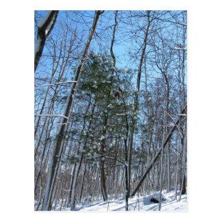 Árboles del coverd de la nieve postal