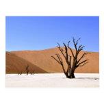 Árboles del desierto postal