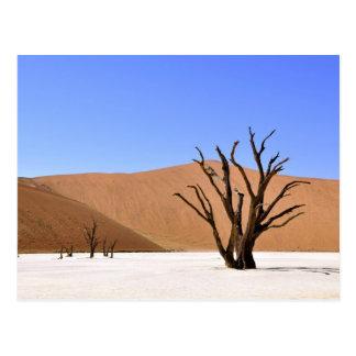 Árboles del desierto tarjetas postales