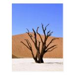 Árboles del desierto tarjeta postal