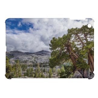 Árboles del enebro y del árbol de hoja perenne de