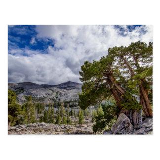 Árboles del enebro y del árbol de hoja perenne de tarjetas postales