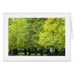Árboles del Ginkgo en la avenida de la montaña, PA Tarjetón