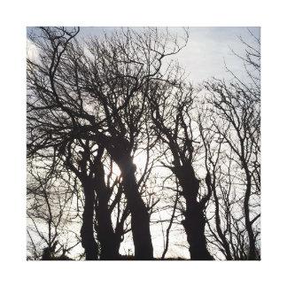 Árboles del invierno a lo largo de un carril lona envuelta para galerias
