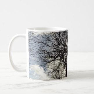 Árboles del invierno a lo largo de un carril taza