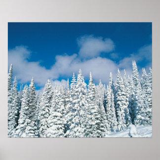 Árboles del invierno barco de vapor Colorado lo Poster