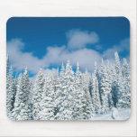 Árboles del invierno, barco de vapor, Colorado, lo Alfombrillas De Ratones