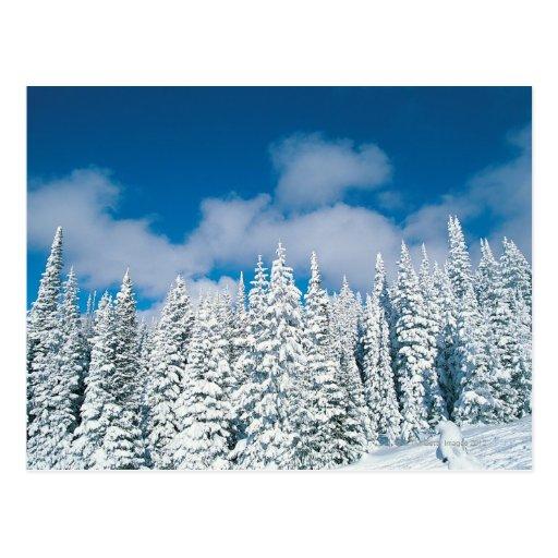 Árboles del invierno, barco de vapor, Colorado, lo Tarjetas Postales