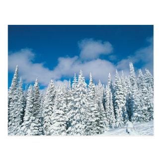 Árboles del invierno, barco de vapor, Colorado, Postal