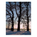 Árboles del invierno en fondo del cielo azul tarjeta postal