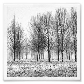 Árboles del invierno cojinete