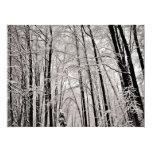 Árboles del invierno invitación 16,5 x 22,2 cm