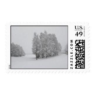 Árboles del invierno franqueo