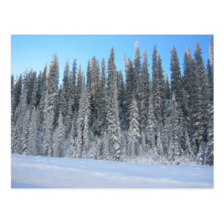 Árboles del invierno tarjeta postal