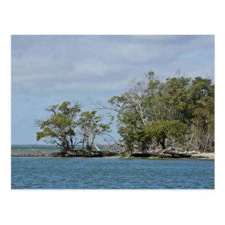 Árboles del mangle en la isla postal