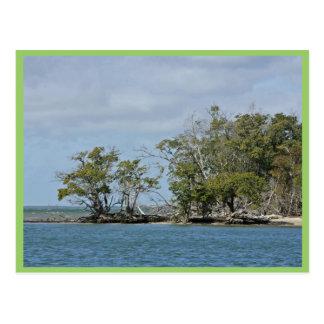 Árboles del mangle en la isla tarjeta postal