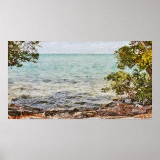 Árboles del mangle en las llaves de la Florida Póster