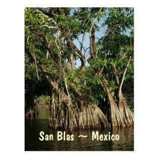 Árboles del mangle en San Blas México Postal