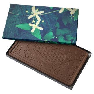 Árboles del Mimosa Caja Con Tableta De Chocolate Con Leche Grande