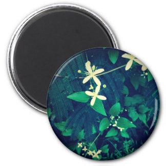 Árboles del Mimosa Imán Redondo 5 Cm