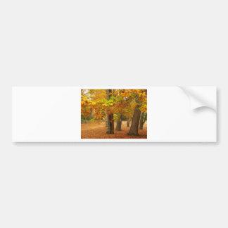 Árboles del otoño pegatina de parachoque