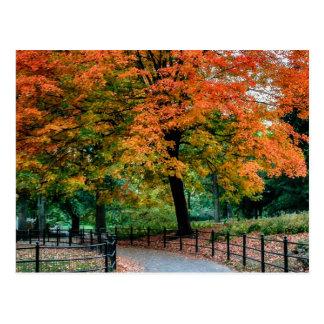 Árboles del otoño en foto del Central Park Postales