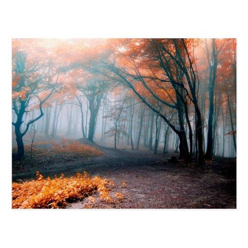 Árboles del otoño en maderas tarjetas postales