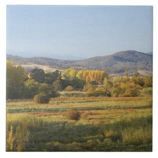 Árboles del otoño, Khancoban, montañas Nevado, nue Azulejo Cuadrado Grande