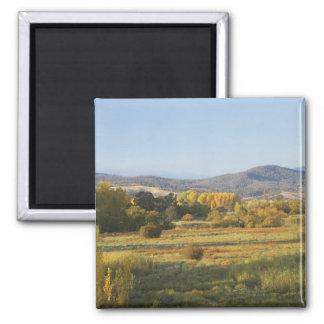 Árboles del otoño, Khancoban, montañas Nevado, nue Imán Cuadrado