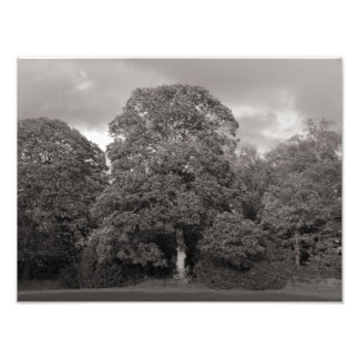 Árboles del otoño, parque del Bute, Cardiff Cojinete