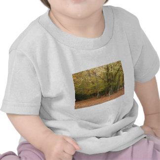 Árboles del otoño camiseta