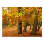 Árboles del otoño postales