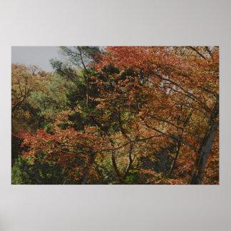 árboles del otoño póster