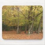 Árboles del otoño tapetes de ratones