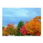 Árboles del otoño tarjeta postal