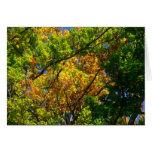 Árboles del otoño tarjetón