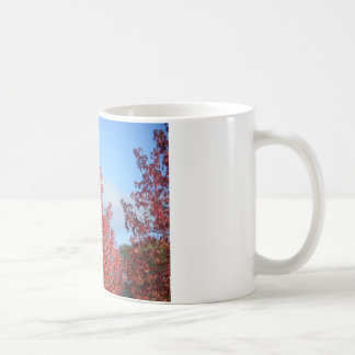 Árboles del otoño taza