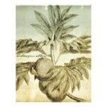 Árboles del pan antiguos Artocarpus Altilis Membretes Personalizados