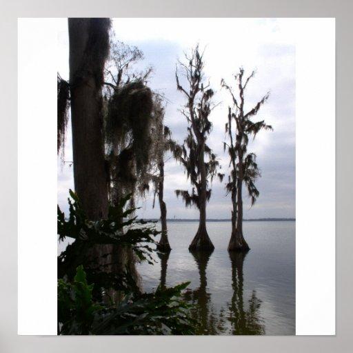 Árboles del pantano de la Florida Póster