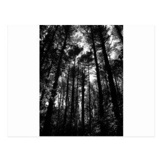 árboles del patio trasero postal