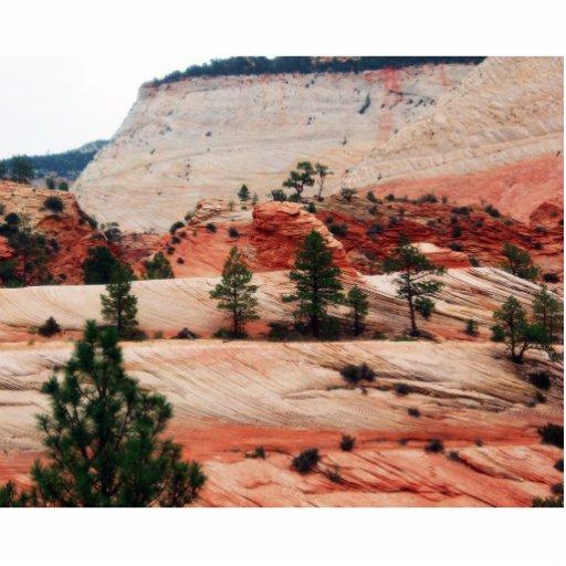 Árboles dentro de las dunas de arena fotoescultura vertical