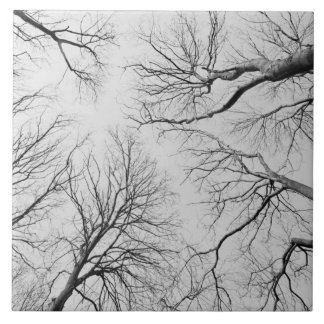 Árboles deshojados en la madera de Thiepval Azulejo Cuadrado Grande