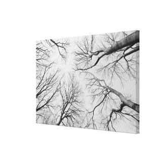 Árboles deshojados en la madera de Thiepval Lona Estirada Galerias