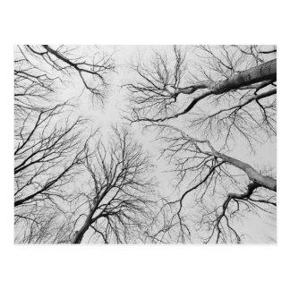 Árboles deshojados en la madera de Thiepval Postales