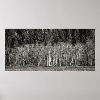 Árboles desnudos en el invierno de Yosemite Posters