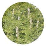 Árboles e hierbas platos de comidas
